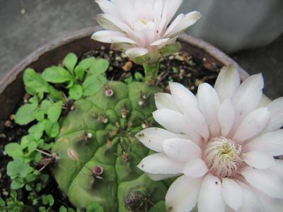 Cactus_4574