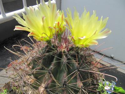 Cactus_4685