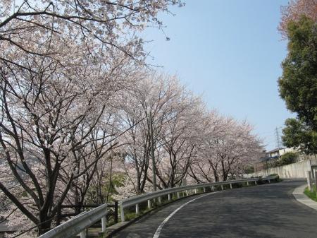 Sakura_3839
